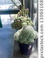 pot, sun, cactus 13060168