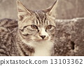 cat, pussycat, a cat 13103362