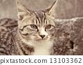 เสือ,ใบหน้า,หน้า 13103362