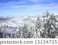 覆有霜的樹 冰霜覆蓋的樹木 山 13134725