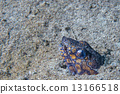 狼 鳝鱼 鱼 13166518