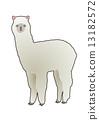 羊驼2 13182572