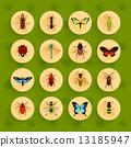 昆蟲 圖標 一組 13185947