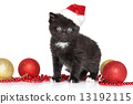 Black Kitten in Santa Red hat 13192115