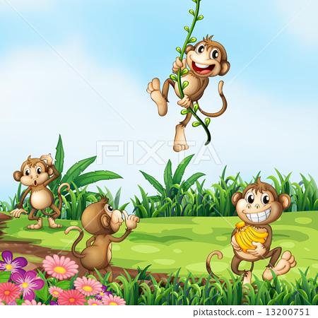 Monkeys playing 13200751