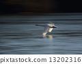 swan 13202316