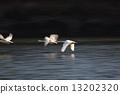 swan 13202320