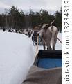 ฟินแลนด์กวางเรนเดียร์ 13234319