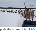 ฟินแลนด์กวางเรนเดียร์ 13234322