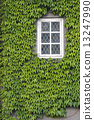 Window with ivy 13247990