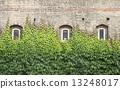 Windows with ivy 13248017