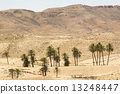 oasis of palm trees and plants in the Atlas Mountains 13248447