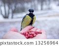นก,สัตว์,ฤดูหนาว 13256964