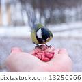 นก,สัตว์,ฤดูหนาว 13256966