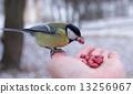 นก,สัตว์,ฤดูหนาว 13256967