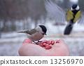 นก,สัตว์,เล็ก 13256970