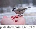 鸟 动物 人类 13256971