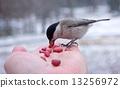 นก,สัตว์,มนุษย์ 13256972