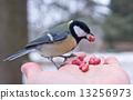 นก,เมล็ดพันธุ์,สัตว์ 13256973