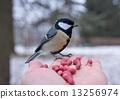 鸟 种子 动物 13256974
