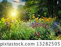 ดอกไม้,แปลงดอกไม้,สวนสาธารณะ 13282505
