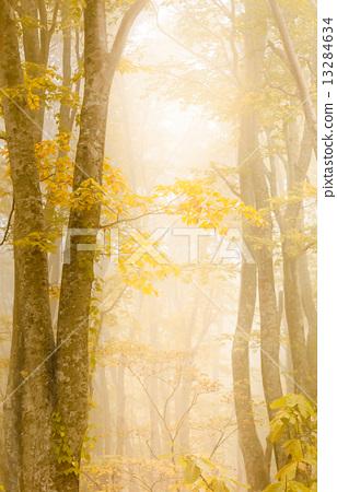 ต้นไม้,ฤดูใบไม้ร่วง,ป่าไม้ 13284634