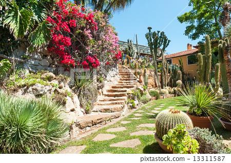 Cactus In The Garden Of Exotic Plants Pallanca In