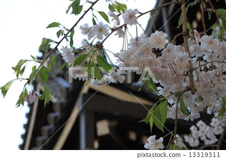Shogakuji 13319311