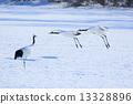 Winter crannies 13328896