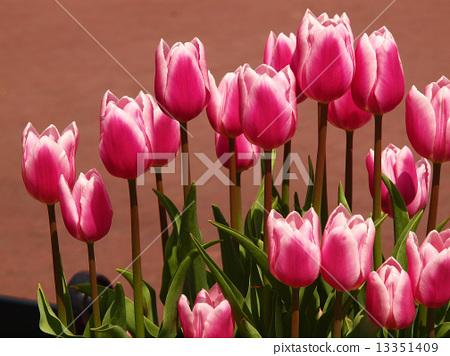 花朵 花卉 花 13351409