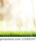 抽象 草地 绿色 13369147