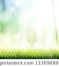牧场 草地 绿色 13369689