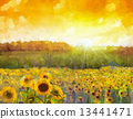Sunflower flower blossom.Oil painting of a rural sunset landscape 13441471