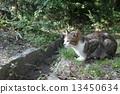 แมว Yamadakeke Park (โอซาก้า) 13450634