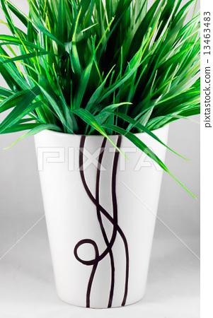 Green herb 13463483