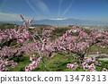 花朵 花卉 花 13478313