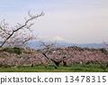 桃园 桃林 富士山 13478315