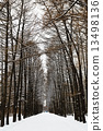 公园 冬天 冬 13498136