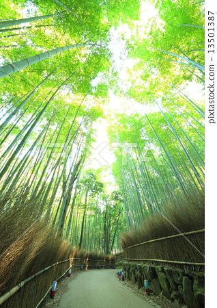 December Kyoto Arashiyama · Bamboo forest small diameter 13501387