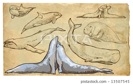 Animals, sea mammals - An hand drawn vector pack 13507545