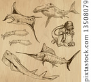Underwater, Sea Life - hand drawn vector pack 13508079