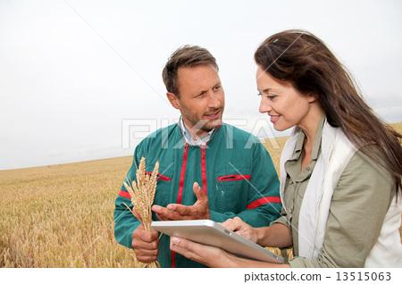 wheat, outdoors, team 13515063