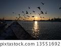 날아가는 바다새 13551692