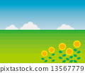 Summer landscape Sunflower steppe 13567779