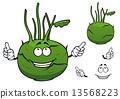 Fresh vegetable kohlrabi cabbage cartoon character 13568223