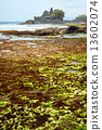 The Tanah Lot Temple, Bali, Indonesia. 13602074
