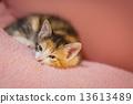Cat to take a nap 13613489