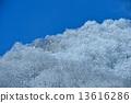 Winter fog ice snow scene image 13616286