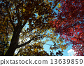 Autumn leaves 13639859