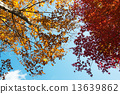 Autumn leaves 13639862